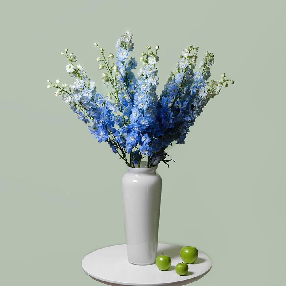 Дельфиниум - купить цветы в Санкт Петербурге