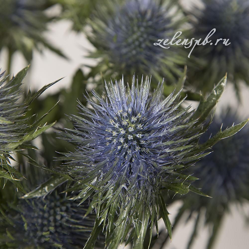 Эрингиум - цветы в Спб