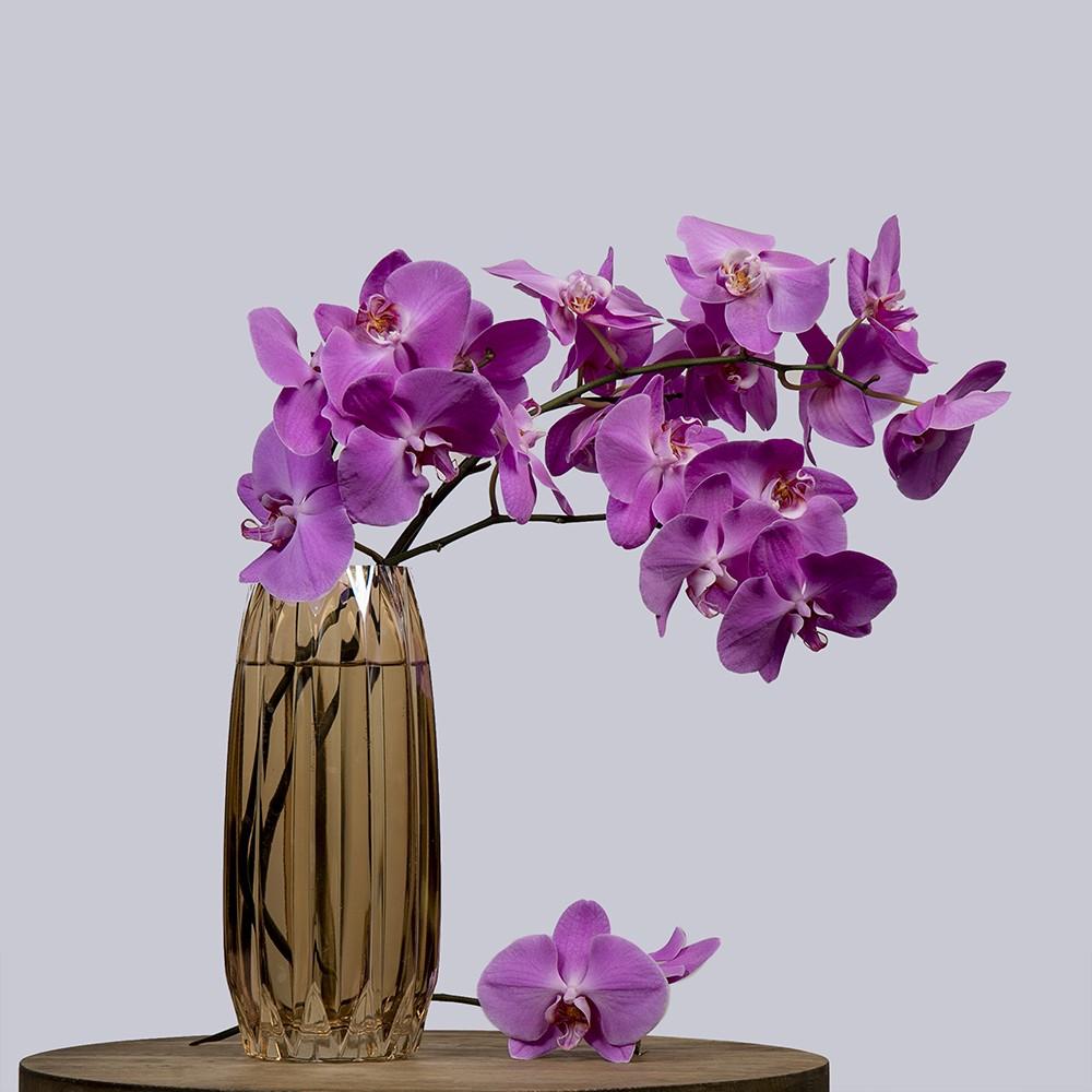 Орхидея Фаленопсис - купить цветы в Санкт Петербурге