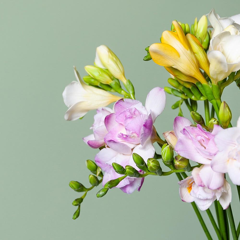 Фрезия микс - цветы в Спб