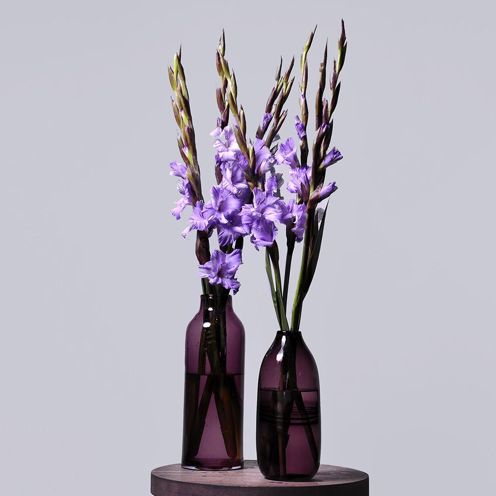 Гладиолус фиолетовый - купить цветы в Санкт Петербурге