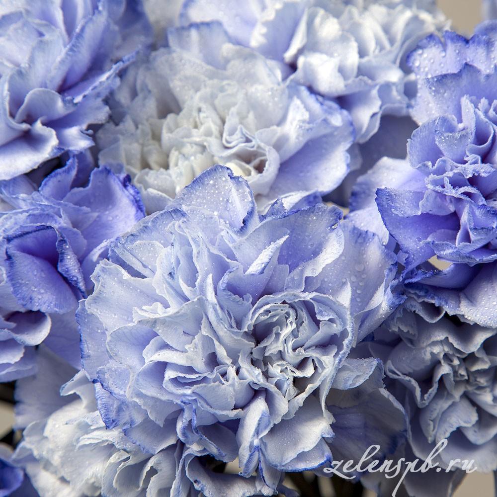 Гвоздика голубая - цветы в Спб