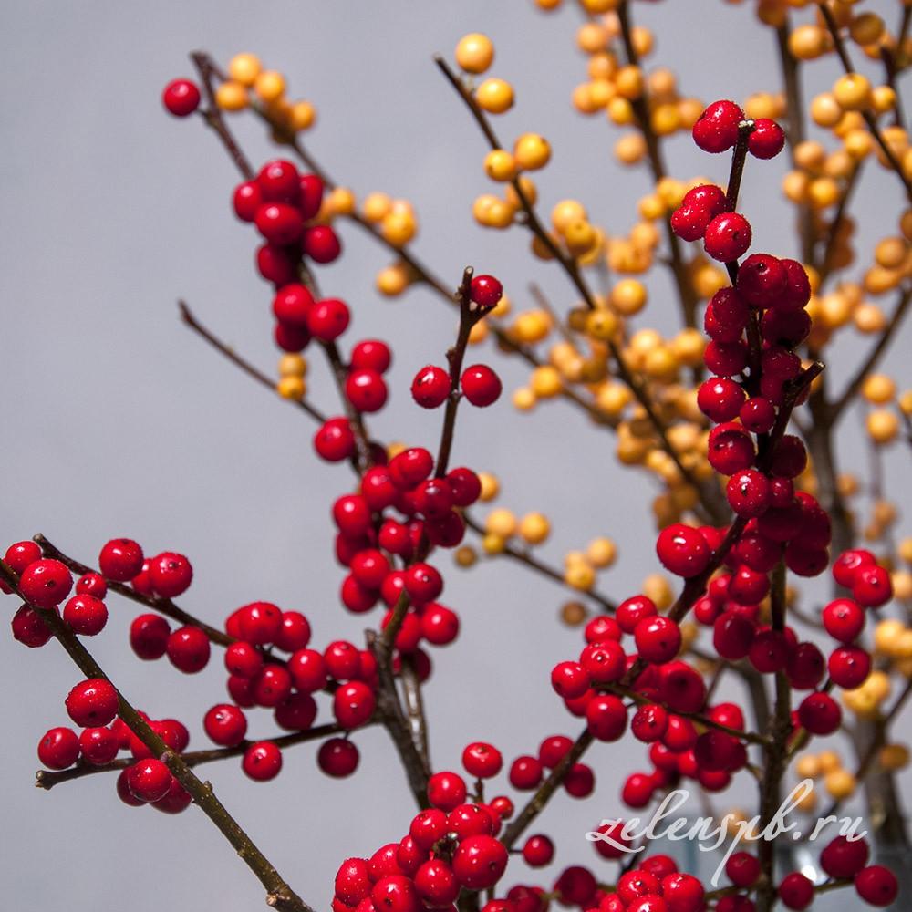 Илекс - цветы в Спб