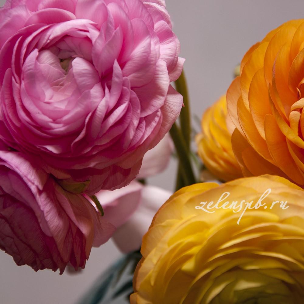 Ранункулюс - цветы в Спб