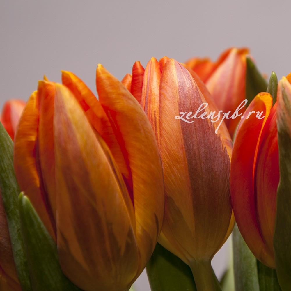 Тюльпан - цветы в Спб