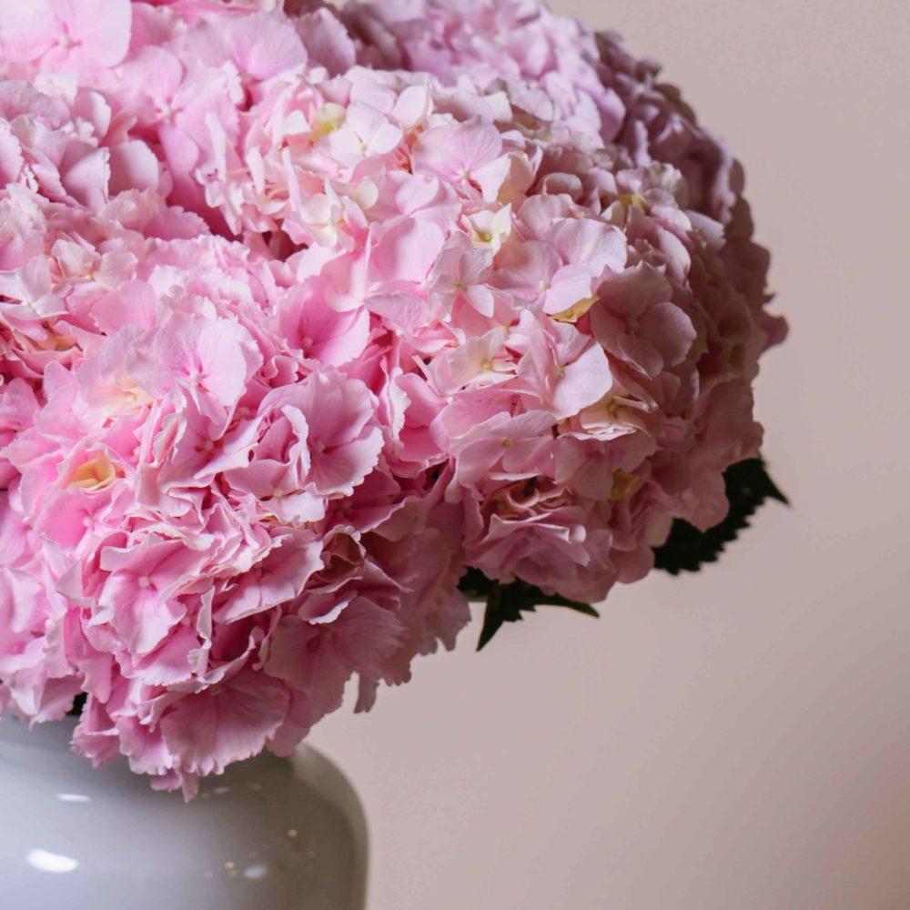 Гортензия розовая - цветы в Спб