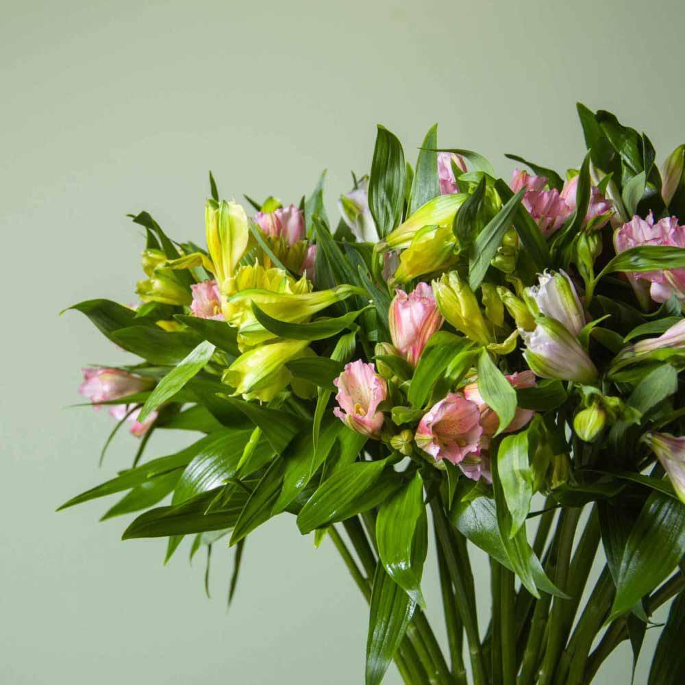 Альстромерия - цветы в Спб