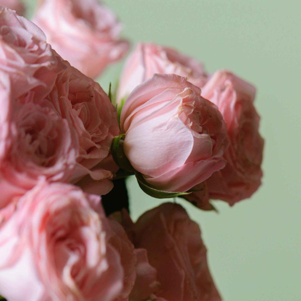 Роза кустовая (сорт Бомбастик) - цветы в Спб