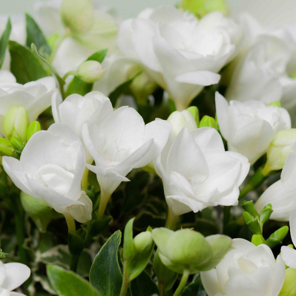 Монобукет из фрезий №1 - цветы в Спб