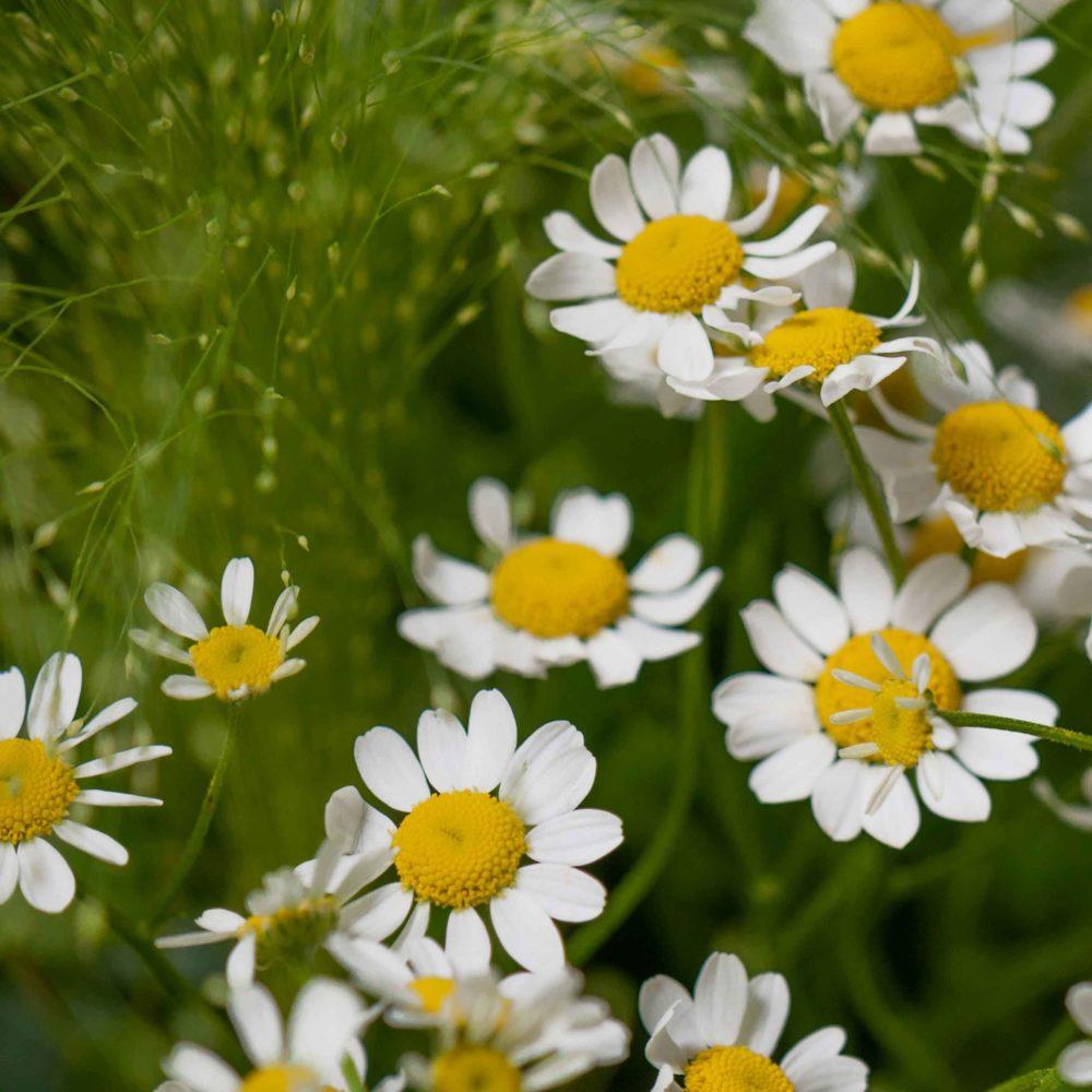 Букет с ромашкой и нигеллой №25 - цветы в Спб