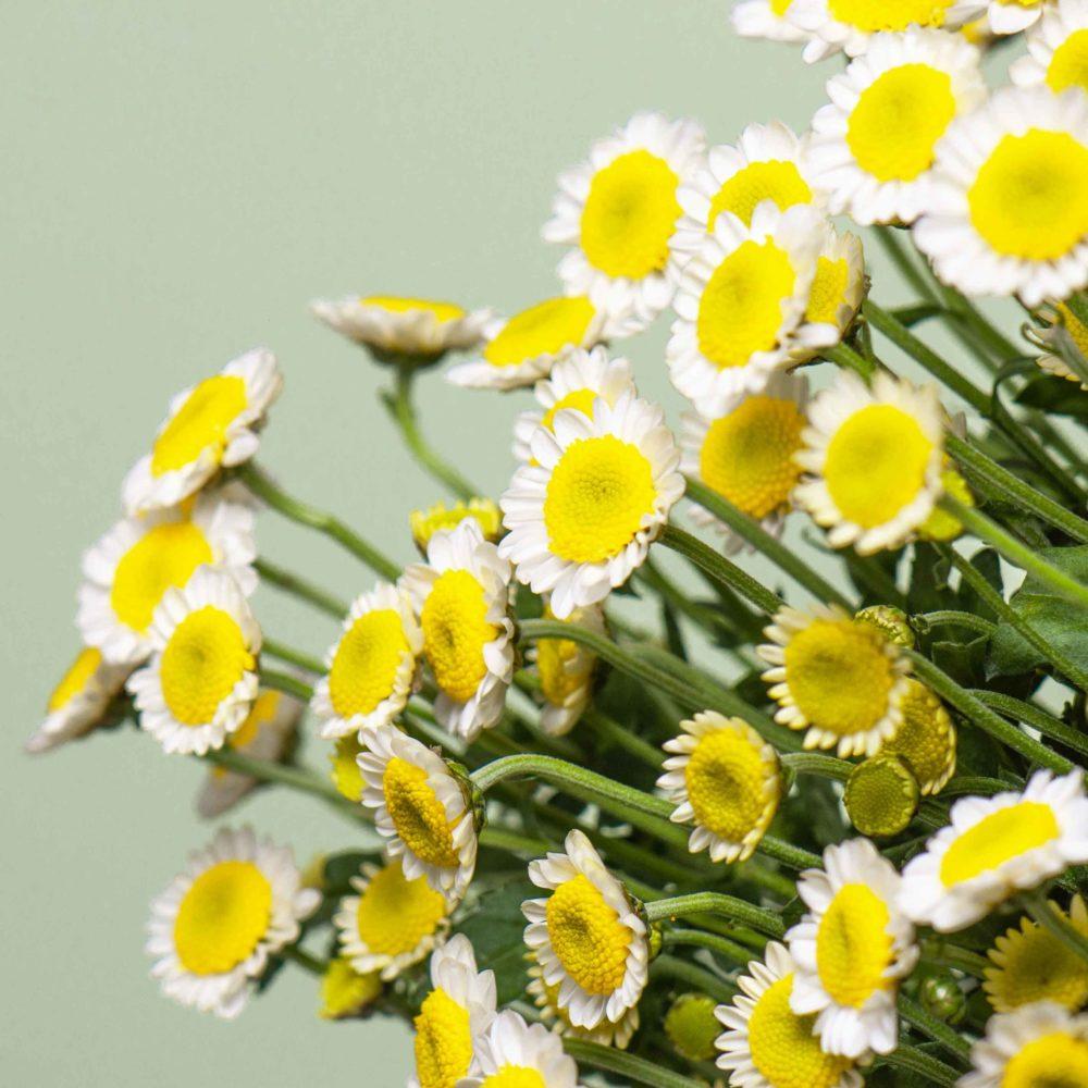 Хризантема Сантини - цветы в Спб