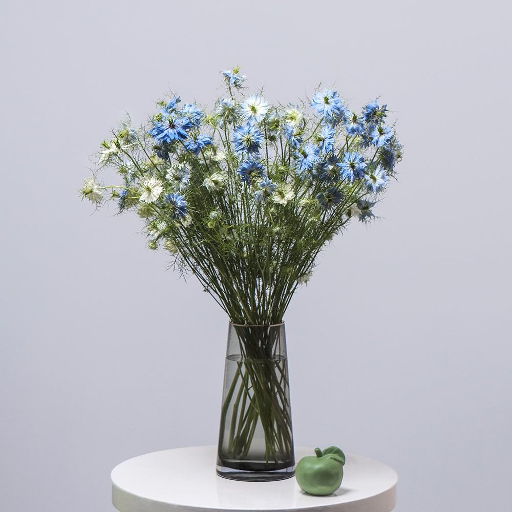 Нигелла - купить цветы в Санкт Петербурге