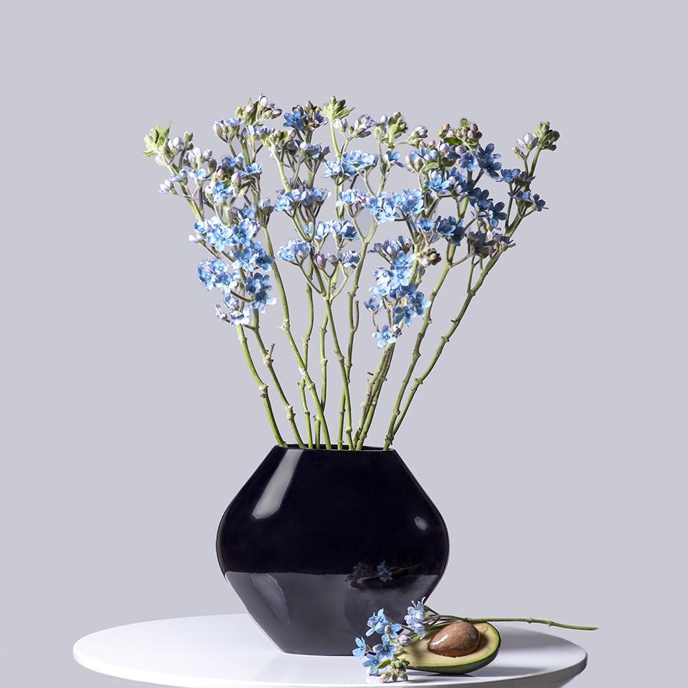 Оксипеталум - купить цветы в Санкт Петербурге