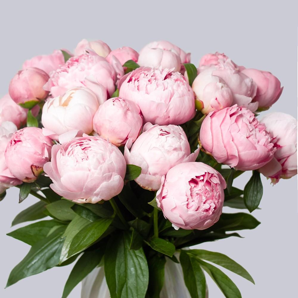 Пион нежно-розовый - купить цветы в Санкт Петербурге