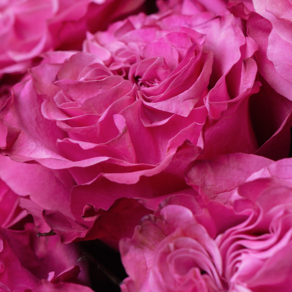 Монобукет из розовых роз №6 - цветы в Спб