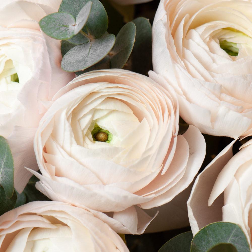 Монобукет из белых ранункулюсов №7 - цветы в Спб