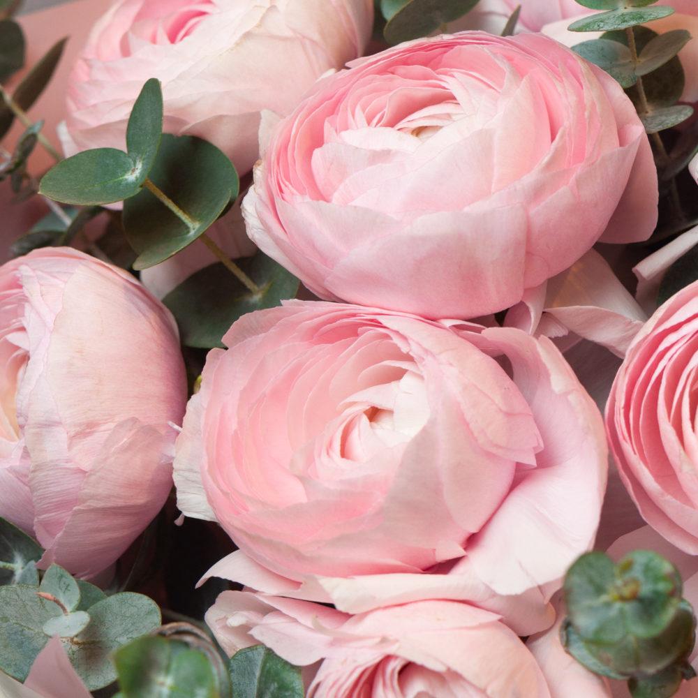 Монобукет из розовых ранункулюсов №8 - цветы в Спб